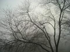 Very Foggy Morning