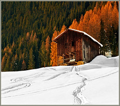 Abandoned (Katarina 2353) Tags: wood trees winter white house snow ski mountains tree abandoned film home nature forest landscape photography switzerland nikon europe flickr paradise suisse image swiss paisaje davos wef snowboard paysage priroda slope skiers tjkp pejza katarinastefanovic katarina2353