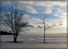 En passant par-là! (-VéRo-) Tags: winter snow landscape hiver neige paysage venise arbre lacchamplain photoquebec lysdor