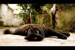Samurai Pussy (-Passenger-) Tags: shadow pet black cat pussy gato bitch passenger yelloweyes cruzada loveher lasombra