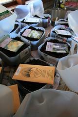 seed packs on bottles