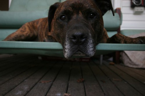 Bon, the dog.