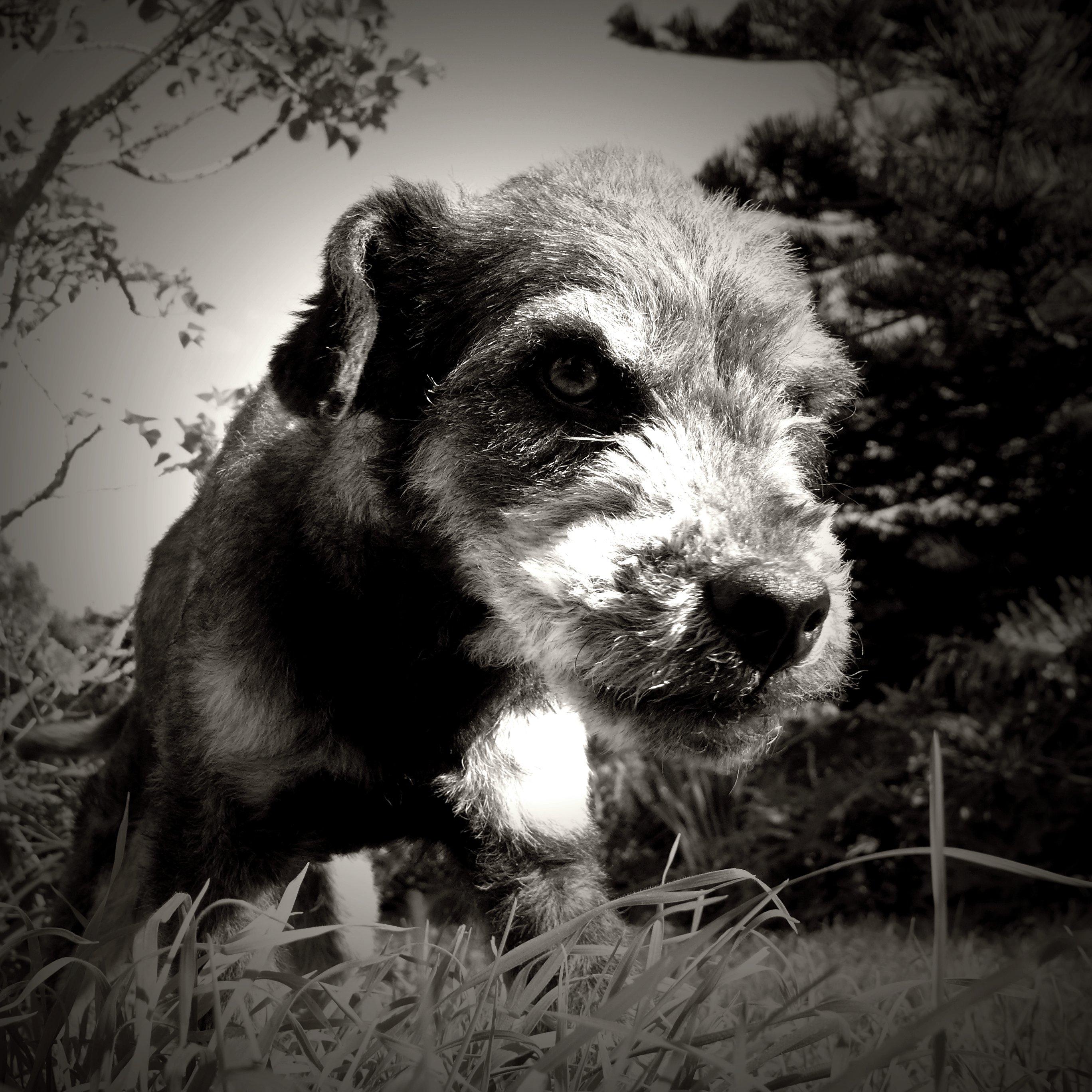 Barradas, the dog