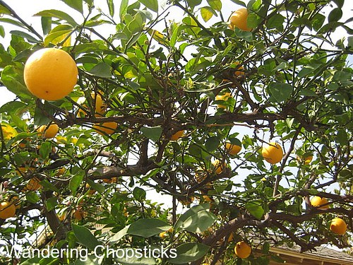 Day 31 Meyer Lemons