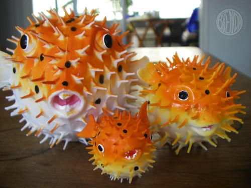 Meet the Blowfish Family