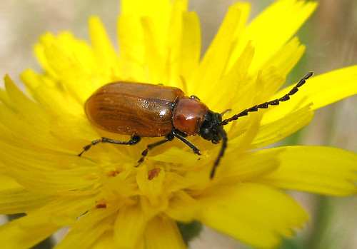 Bug on yellow flower