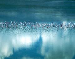 flamingo migration makgadikgadi pan