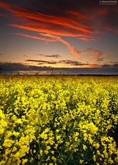 Rapeseed Sunset (.Brian Kerr Photography.) Tags: sunset sky field yellow clouds canon landscape cumbria rapeseed cumbrian durdar leefilters hitechfilters eos5dmkii briankerrphotography