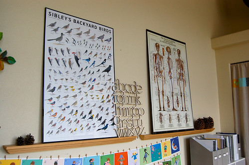 birds and skeletal system