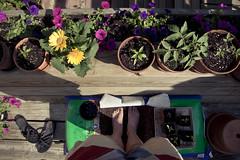 14/52 Garden Time {hbm}
