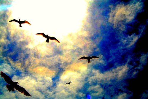 Seagulls High Drama