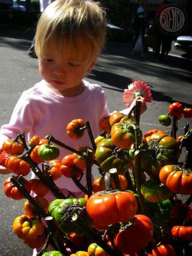 little pumpkins!