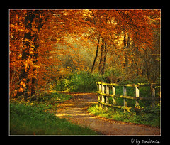 fallow your way (claudia hering (sundance)) Tags: autumn trees fence way bravo framed soe themoulinrouge supershot flickrsbest pentaxk110d platinumphoto anawesomeshot impressedbeauty superaplus aplusphoto superbmasterpiece diamondclassphotographer theunforgettablepictures thegoldenmermaid followyourway proudshopper theperfectphotographer thegardenofzen thegoldendream theroadtoheaven