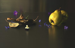 Autumn Still LIfe (Arno Rupert) Tags: life blue autumn flower green leaves still purple pansy bloom borage quince