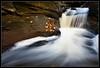 1 second. (Tom Kaszuba) Tags: longexposure autumn fall water leaves landscape connecticut sream franklinconnecticut thegoldenmermaid tomkaszuba
