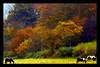 Rural Idyll (Dave - aka Emptybelly) Tags: horse field wales rural scene vista idyll autumnal tintern abigfave superbmasterpiece diamondclassphotographer flickrdiamond