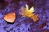 friends (hans solcer) Tags: autumn fall bravo vivid polaris thegoldenmermaid thegardenofzen