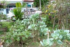 Aunty's Garden Patch