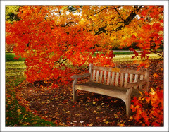 November (lyadarus) Tags: uk autumn red england orange kewgardens color colour green fall yellow digital garden chair nikon europe afternoon unitedkingdom britain dslr soe naturesfinest supershot d80 18135mm nikonstunninggallery mywinners anawesomeshot impressedbeauty ultimateshot diamondclassphotographer flickrdiamond theperfectphotographer