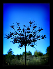 Fractals (tochis) Tags: blue espaa tree nature contrast lomo lomography spain peacock genealogy fractals pyrenees aragn genealogical serrablo 10faves aplusphoto deletedfromflickrhearts deletedfromheartawards deletedfromnature deletedfrom123nature