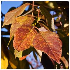 IMG_4127rw (hz536n/George Thomas) Tags: autumn trees fall oklahoma stillwater 2007 canonef70200mmf4lusm pse5