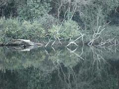 wooden reflextion (hockberg99) Tags: wood tree pond reflextion