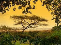 16 - Acacia africana - African Acacia (bruno.campestrin) Tags: africa trees panorama plants lake nature alberi landscape tanzania lago view natura vista veduta lakemanyara ngi vegetazione naturalmente naturesfinest 333views 100faves lakemanyaranationalpark 25faves abigfave anawesomeshot superaplus aplusphoto diamondclassphotographer favemegroup10 superfaveme arusharegion 75faves naturewatcher colourartaward platinumheartaward theperfectphotographer nginationalgeographicbyitalianpeople llovemypic lagomayara parconazionalelagomanyara acaciaafricana africanacacia lanawesomeshot lesamisdupetitprince novavitanewlife aboveandbeyondlevel1 aboveandbeyondlevel2