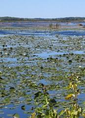 Montezuma Swamp | RM.