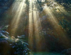just sunbeams (algo) Tags: sunbeams rays forest chilternforest england algo light searchthebest 200750plusfaves topf50 topv111 bravo vision topf100 topv333 firstquality topv999 topv1111 theperfectphotographer 0822 chilterns photography topv3333 50f 100f 200f topf200