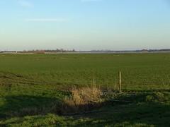 The 100 Pictures Challenge (Davydutchy) Tags: lake netherlands grass weide meer meadow gras february 2008 friesland fryslân langweer langwar langweerderwielen thebiggestgroup vogonpoetry tbgchallenge1 vogoncentum