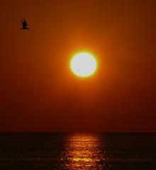 Flying Solo (priscilla.starling) Tags: light sunset red sun color reflection bird nature water sunshine yellow gold flying colorful alone glow gulf sundown bright tampabay florida photos orb solo setting priscilla bestofflickr sweetshot mybestphotos sunshotsanyweather beautifulcapture panasoniclumixdmcfz50 bestsunsetandsunrise flickrelitegroup mothernatureatherbest sunshine~luckystar zenenlightenment gaveyachills yourpreferredpicture bestminimalshot florida~thesunshinestate beautyfullworld eyesofacuerub fanflickrtastic photographythattouchesyourheart