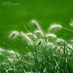 Meadow with green grass (pavel conka) Tags: summer green nature beautiful grass gardens digital canon garden botanical eos corn seasons natural gardening background grain meadow fresh greens fields florist botany cereals soe herb natures freshness pavel louka herbage cubism zelen trva mywinners anawesomeshot diamondclassphotographer conka goldstaraward