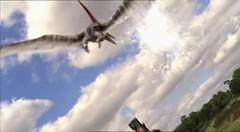 05 Pteranodon