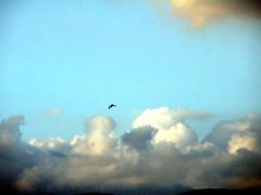 Uccello in volo in uno squarcio di cielo (Alvignano) (fotommi) Tags: sky bird liberty fly italia nuvole blu flight volo campagna cielo infinito libert uccello caserta oltre alvignano