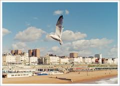 brighton (mooGibang) Tags: leica england beach 35mm john sussex pier seaside brighton f14 postcard m8 summilux asph seagul hinde