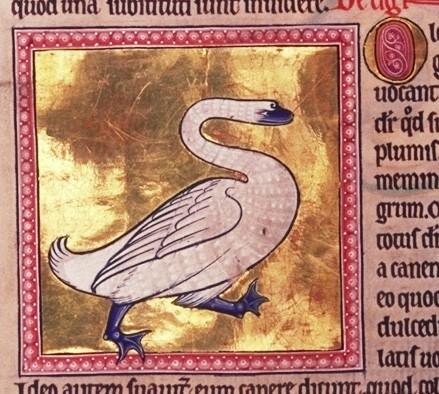 5- Folio 58v detalle- Cisne -© Aberdeen University Library