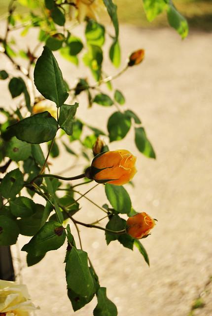 http://farm3.static.flickr.com/2317/5698444085_92eba081b1_z.jpg