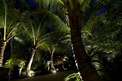 Landscaping Sarasota Florida with Tropical Palm Trees (Sarasota Secret Gardens) Tags: lighting trees gardens landscape florida outdoor designer landscaping secret palm tropical designs sarasota custom erezback