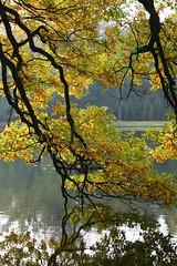 Autumn lake (Karin & Rene) Tags: autumn trees lake fall netherlands pool bomen branches herfst apeldoorn takken vijver hetloo paleispark karinenrene2007