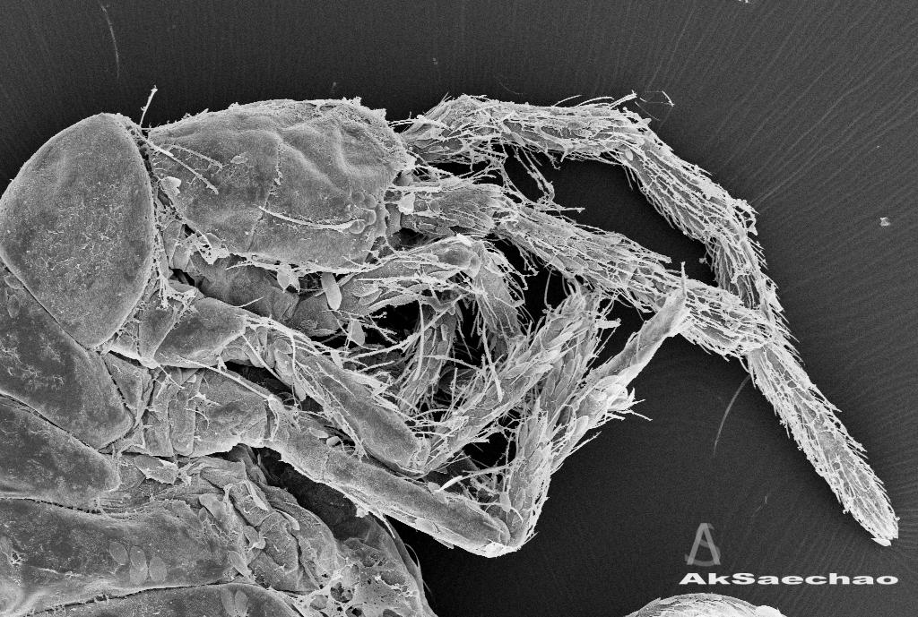Konu mikropların mikroskop görüntüleri