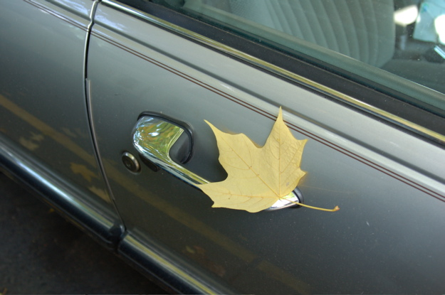 leaf_car_door1