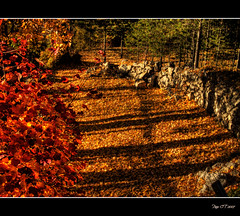 Stone wall (Paco CT) Tags: autumn red fall rojo otoo hdr vegetal 2007 pacoct