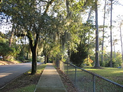 summer in November's end! (freestone) Tags: park street autumn usa green nature cemetery grass yard landscape outdoors moss florida south peaceful atmosphere sidewalk urbannature spanishmoss tallahassee subtropical bushes subtropics oldsouth