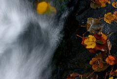 Foglia e Acqua (sinnomore) Tags: autumn italy brown rome roma verde green water yellow forest river leaf aperture tramonto fiume giallo foglia acqua autunno castel lazio bosco giuliano bracciano sigma70300 nikond200
