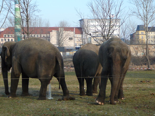 Elefanten des Zirkus Busch-Roland (03)