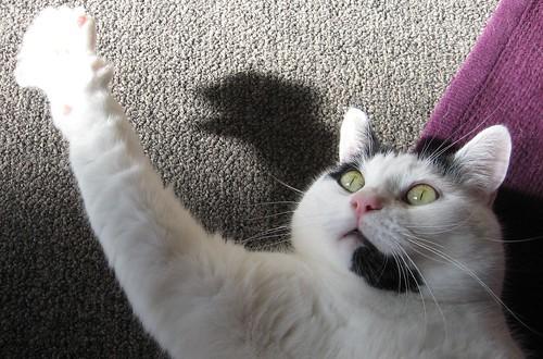 cat lying on a carpet