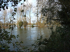 River in flood 2008 - Thames path (macfudge1UK) Tags: uk trees winter england nature water thames river europe flood 2008 oxfordshire thamespath oxon naturesfinest swinford allrightsreserved swinfordtollbridge diamondclassphotographer flickrdiamond theunforgettablepictures landscapesdreams