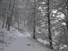 Robles nevados (mano derecha KO) (jtsoft) Tags: asturias olympus sotres picosdeeuropa e510 cabrales zd1122mm jtsoftorg
