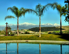 Snow and Palm Trees (Mine Beyaz) Tags: blue snow mountains water pool view searchthebest palm palmtrees su dag daglar palmiye mavi kar manzara havuz blueribbonwinner 10faves mywinners superbmasterpiece minebeyaz