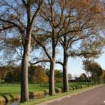 Beemster: Volgerweg landscape in autum